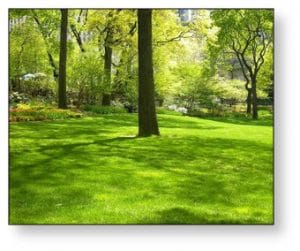 5 Tall, Fast-Growing Trees for Your Oregon Commercial Property