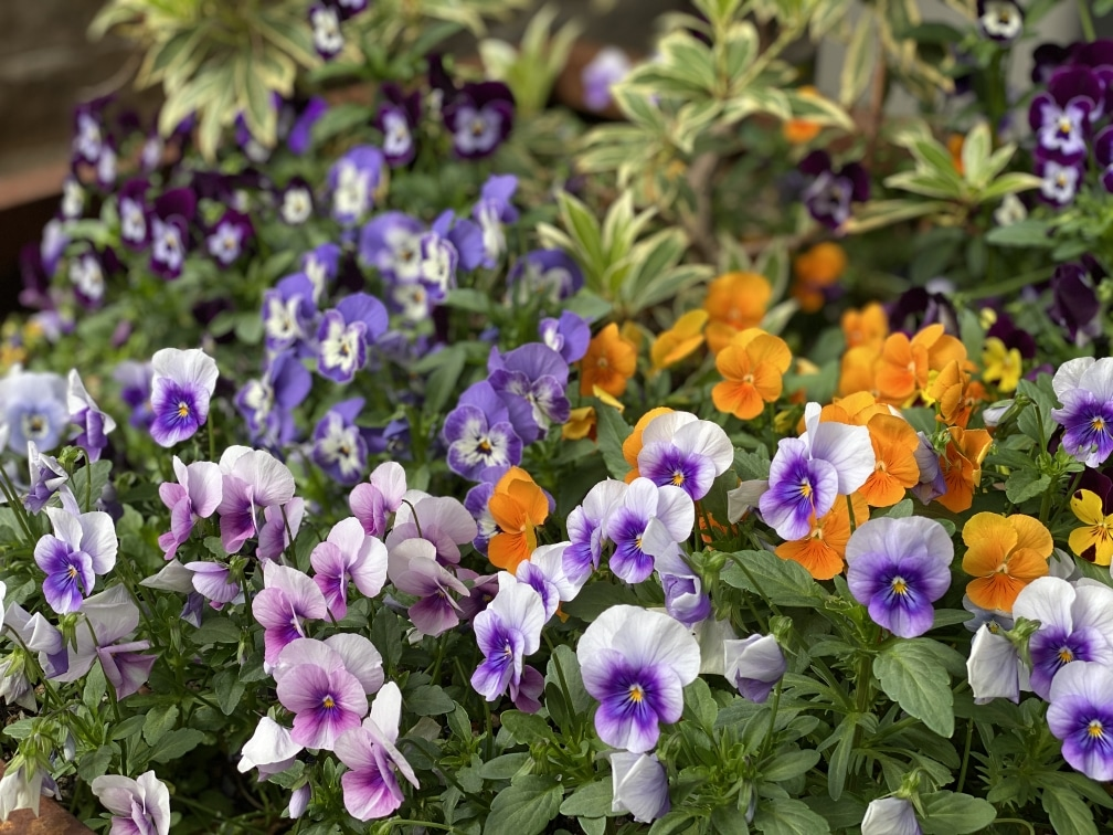 Summer Landscaping Tips for Medford Homeowners