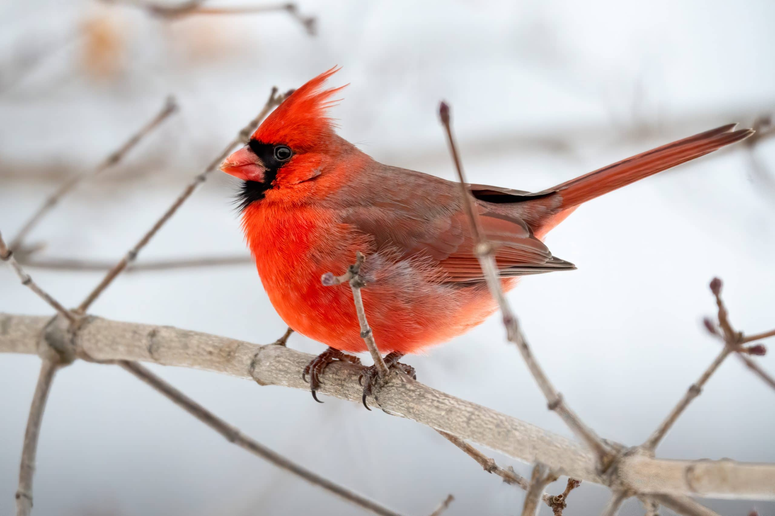 Keep Your Yard Stocked to Attract Birds This Winter