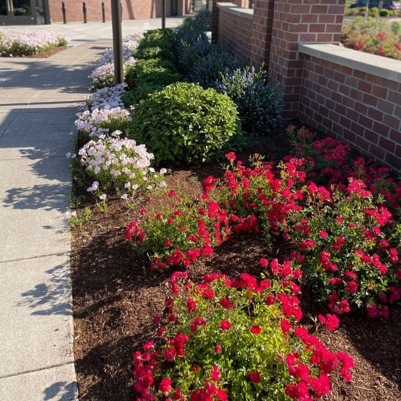 3 Commercial Landscaping Tips to Remember This Season